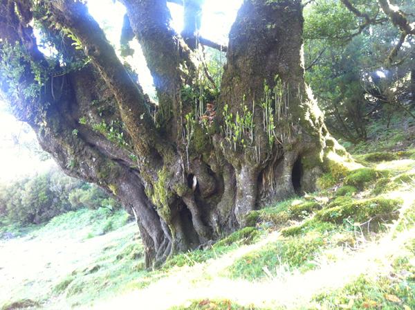 Bäume Malen
